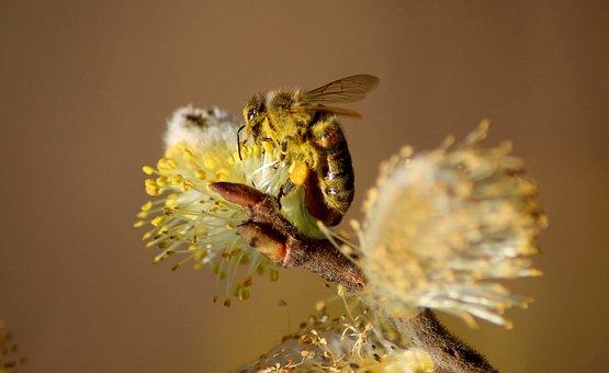Bee, Macro, Forage, Flower, Nectar, Garden