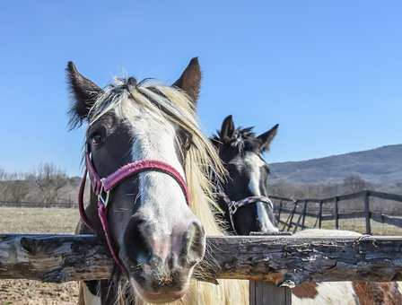 Horse, Farm, Outdoor, Nature, Animal, Ranch, Mammal