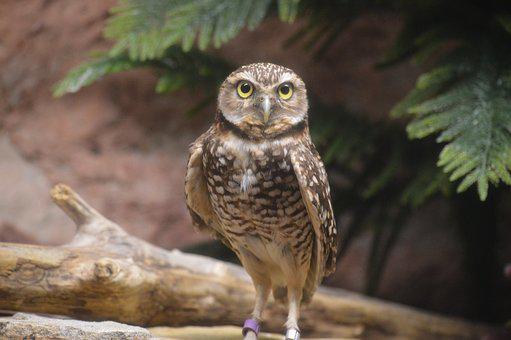 Owl, Speckled, Wings, Feather, Hunter, Eyes, Spotted