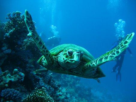 Sea, Tortoise, Smolensk, Korman13, Immersion, Octopus