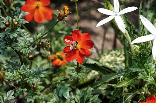 Bee, Flowers, Botanical Garden, Garden, Pollination