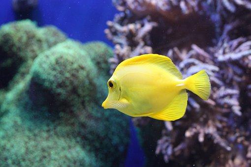 Fish, Aquarium, Sea Life, Coral Reef