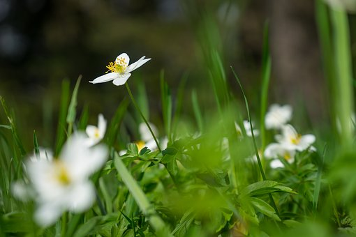 Flower, Nature, Background, Desktop Background