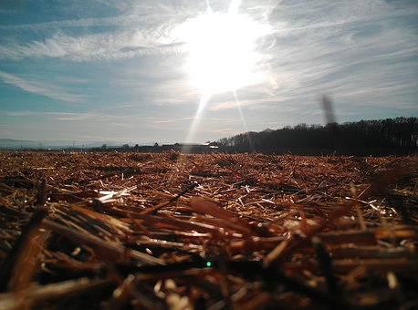 Sun, Field, Straw, Landscape