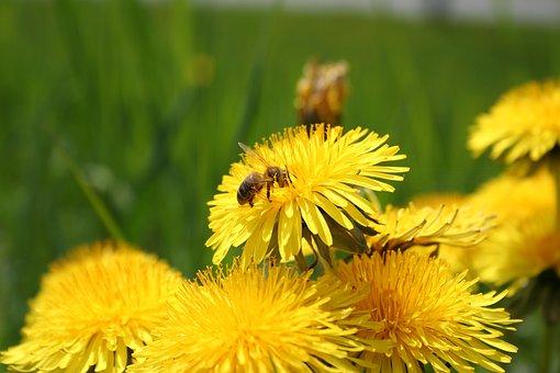 Flowers, Bee, Yellow, Nature