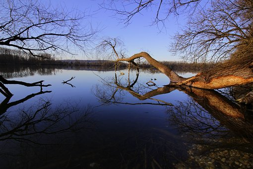 Water, Lake, Forest, Nature, Bank, Waters, Reflections