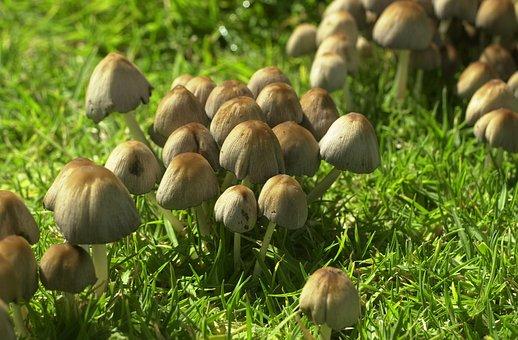Fungi, Toadstool, Fungus, Autumn, Season, Small