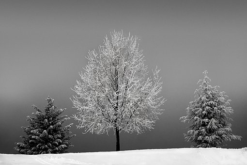 Trees, Winter, Cold, Snow, Wintry, Snowy, Landscape