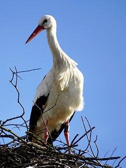 Stork, Bird, Nest, Storchennest, Rattle Stork, Adebar