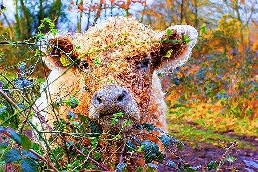 Cow, Portrait, Colourful, Artistic, Textured, Head