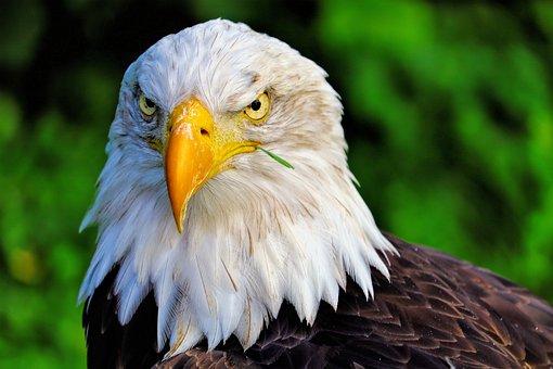 Bird, Holland, Animal, Nature, Dutch