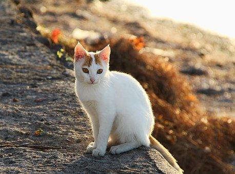 Cat, Bokeh, Day Light