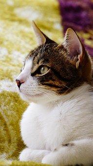 Serious Cat, Feline Look, Cat, Kittens, Domestic Feline