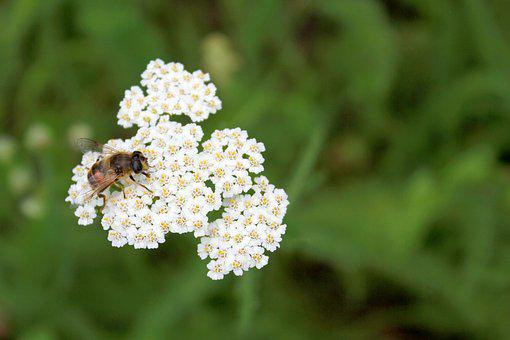 Bee, Flower, Nature, Spring, Honey, Green, Insect