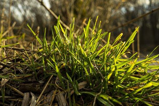 Grass, Green, Meadow, Nature, Macro, Summer, Close