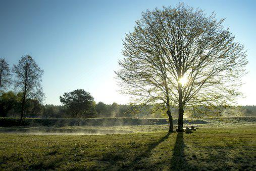 Early Spring, Poetry, Morning, Landscape, The Fog