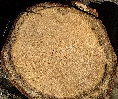 Annual Rings, Wood, Tribe, Tree, Log, Nature