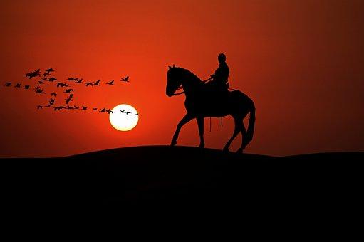 Reiter, Horse, Animal, Ride, Equestrian, Leisure