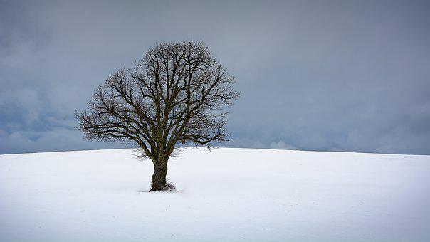 Tree, Winter, Snow, Nature, Winter Trees, Landscape
