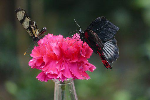 Butterflies, Butterfly, Exotic, Insect, Tropical House