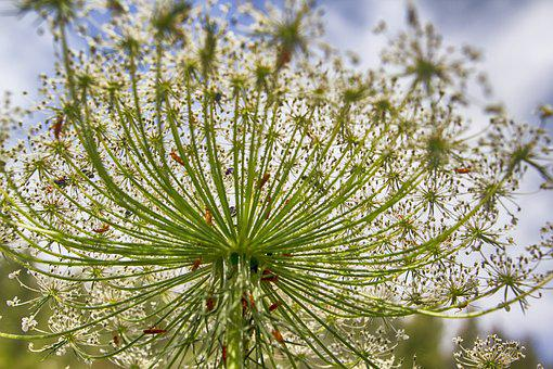 Flower, White, White Flowers, Nature, Spring, Water