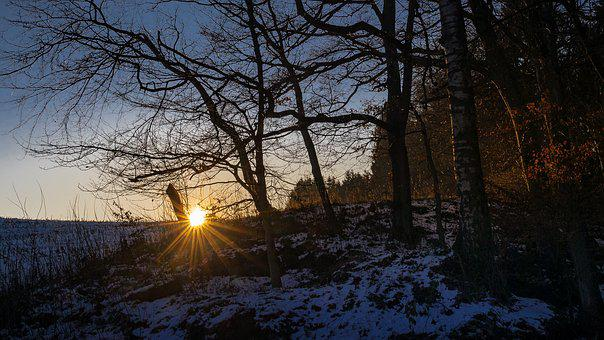 Forest, Winter, Snow, Evening, Sunset, Wintry, Cold
