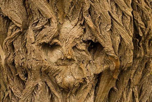 Tree, Face, Tree Face, Background, Desktop Background