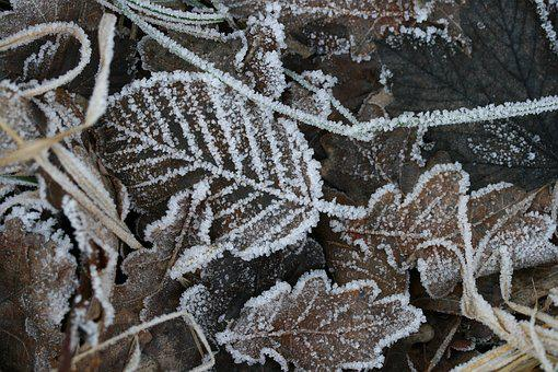 Leaves, Hoarfrost, Frost, Winter, Nature, Iced