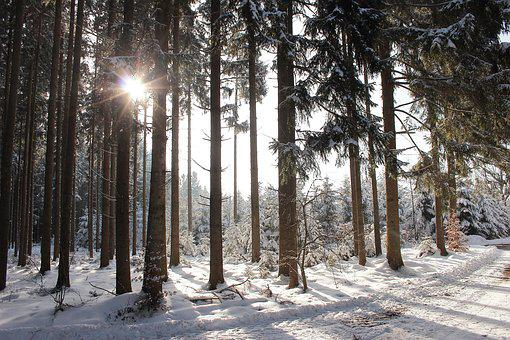 Winter Sun, Forest, Snow, Back Light, Winter, Nature