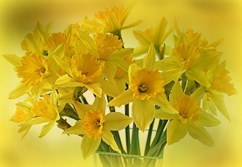 Daffodils, Osterglocken, Flowers, Spring, Bouquet