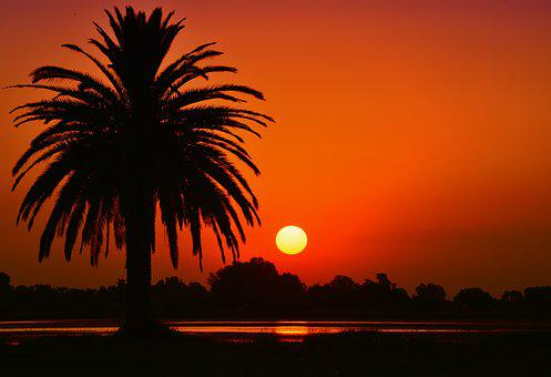 Sunset, Landscape, Laguna, Palm Tree, Silhouette