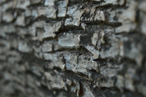Bark, Tree, Plant, Nature, Texture, Pattern, Natural