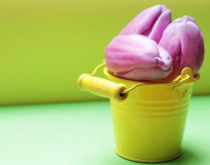 Tulips, Bucket, Tulip Flower, Yellow Bucket, Purple