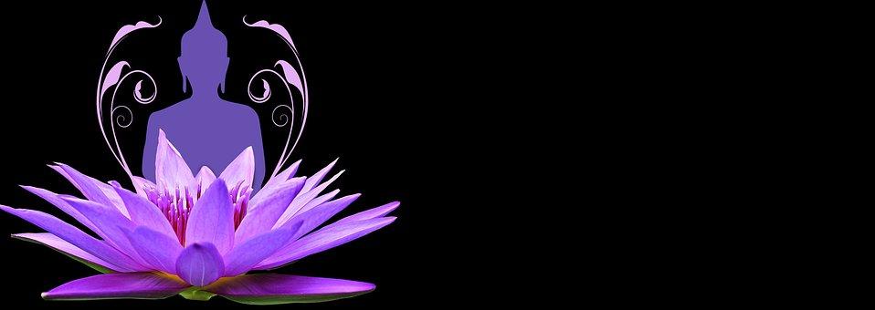 Water Lily, Pink, Purple, Wellness, Meditation, Nature