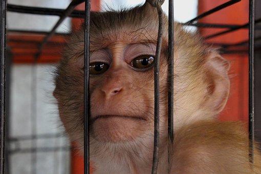 Monkey, Animal, Zoo, Wild, Nature, Mammal, Head, Brown