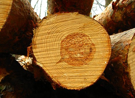 Tree, Log, Forest, Nature, Tribe, Wood, Annual Rings
