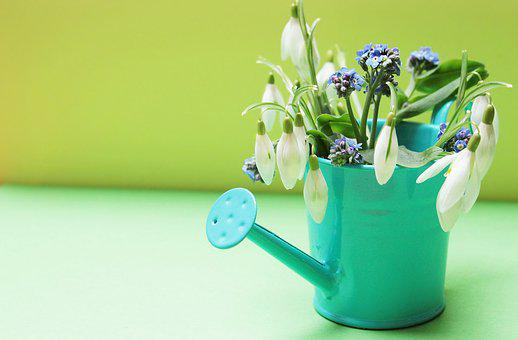 Snowdrop, Forget Me Not, Flowers, Watering Can, Yellow