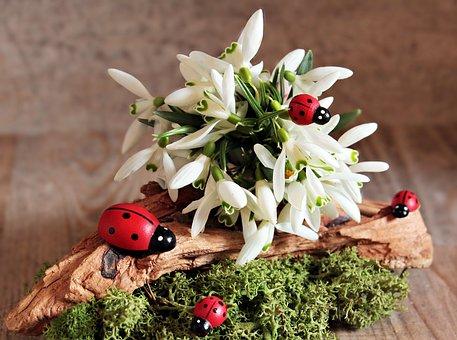 Snowdrop, Ladybug, Flower, Frühlingsanfang, Spring
