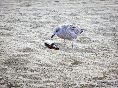Seagull, The Seagulls, Fly, Birds, Beach, Garbage