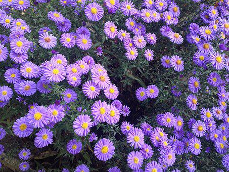 Garden, Violet Flowers, Flowers, Plant, Violet, Blooms