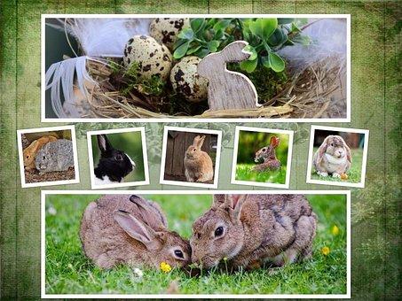 Rabbit, Easter, Collage, Background, Symbol, Animal