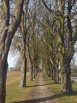 Chestnut Avenue, Trees, Row Of Trees, Sierksdorf