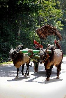 Cart, Oxcart, Ox, Bauer, Sri Lanka, Road, Rural
