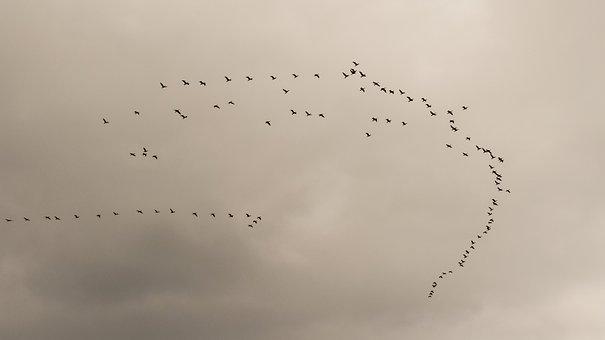 Swarm, Flock, Birds, Migratory Birds, Migration, Nature