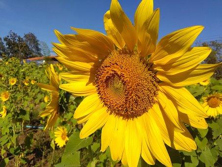Sun, Sky, Summer, Blue, Yellow, Blue Sky, Beautiful