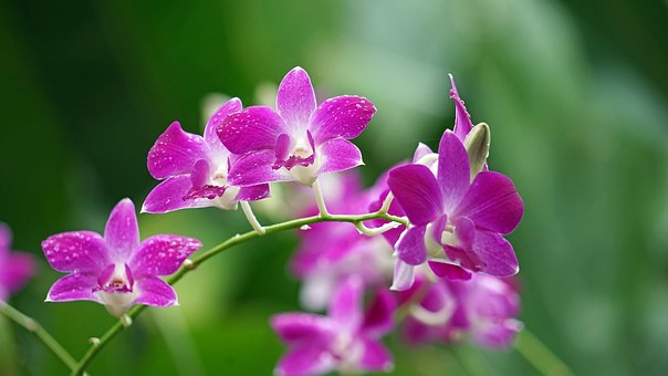 Orchids, Purple, Blossom, Bloom, Color Game, Plant