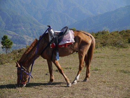 Horse, Animal, Pet, Mountain, Care, Ranch, Farm