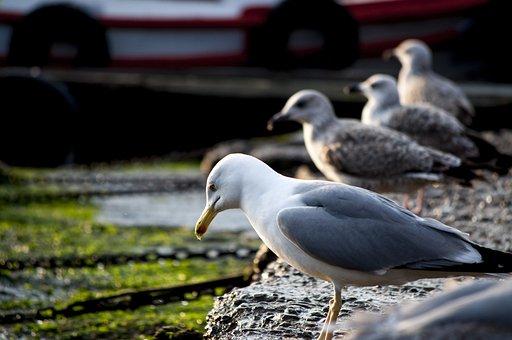Seagull, Marine, Moss, Beach, Sky, Landscape, Turkey