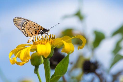 Macro, Africa, Butterfly, Yellow, Bush