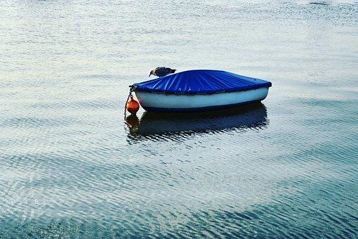 Bird, Boat, Water, Day, Sea, Natural, Blue